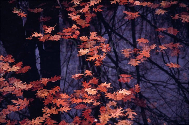 photograph of autumn leaves at night