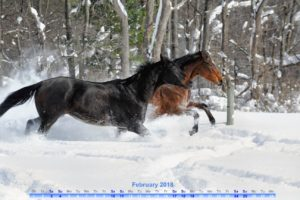 digital February 2018 calendar featuring horses running through the snow