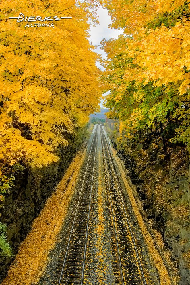 Brilliant yellow fall leaves over railroad track perspective.