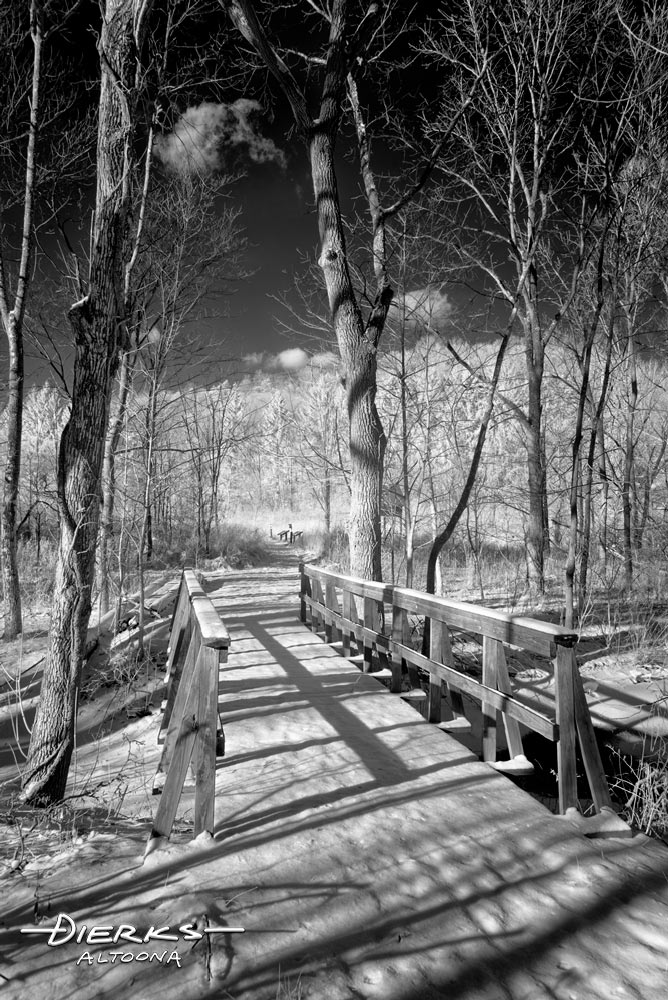 A forest bridge in winter snow landscape, black and white.