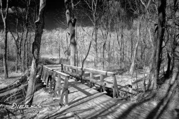 Winter bridge in forest snow landscape, black and white.
