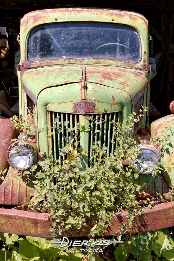 Old green pickup truck from the forties overgrown with junkyard weeds, made by White Trucks.