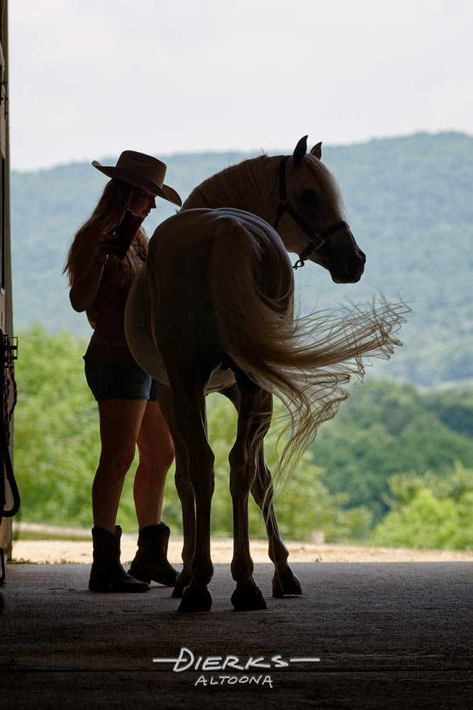 A cowgirl grooms her pretty horse with the swishing tail in a barn door silhouette.