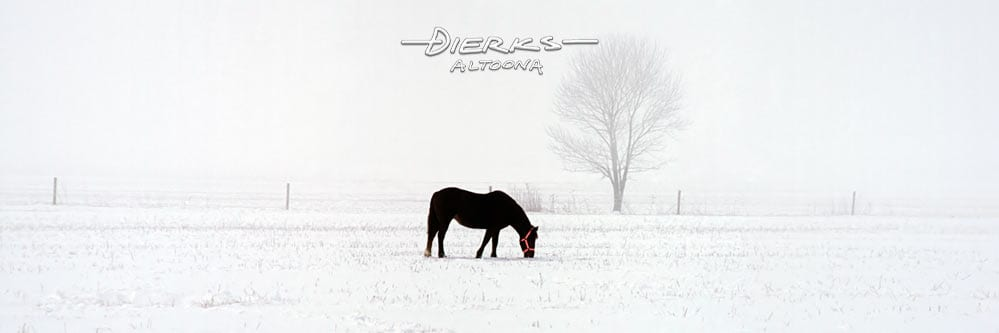 Horse art from a horse photo panorama with a single black mare in the snow with a new red halter photo.