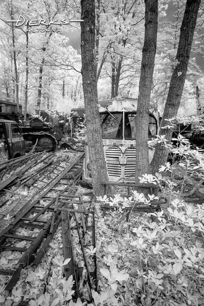 An old Metro Van languishes in a wooded junkyard, a prisoner of the surrounding trees.