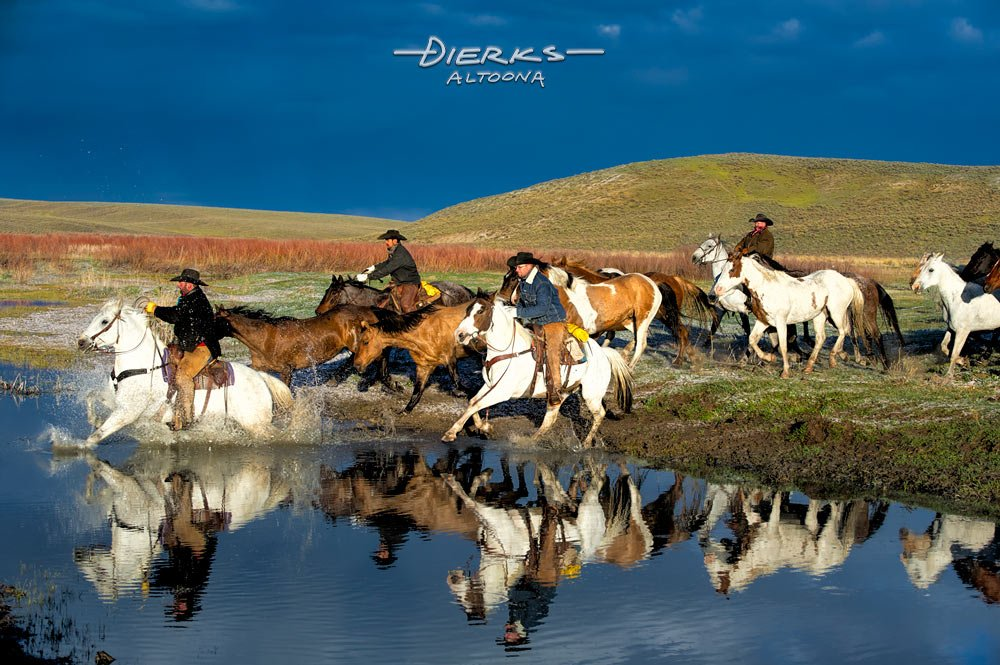 Cowboys riding herd moving horses across a cold morning stream.