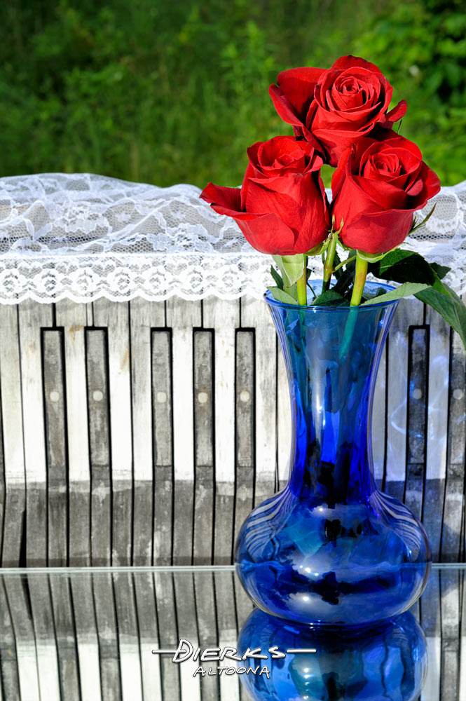 A bouquet of red roses in a blue vase sits with a piano keyboard and lace outside in nature.