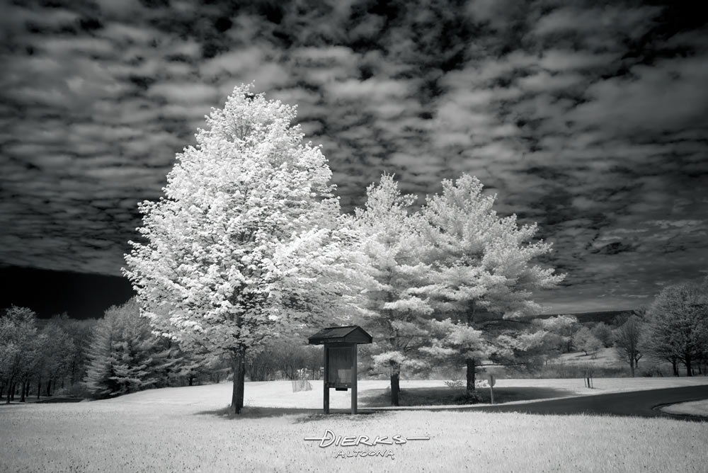 Spring leaves at a signpost along a park road, a black and white infrared picture.