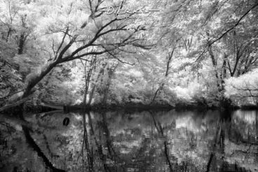 A swimming hole with tire swing hanging above the water along the wooded Little Juniata River near Tyrone, Pennsylvania. A black and white infrared picture.