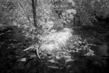 A narrow and rocky island with few tall trees lies in the middle of the Juniata River in central Pennsylvania. A black and white infrared picture.
