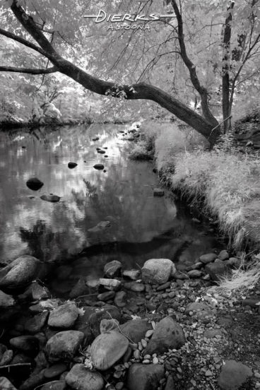 A curving tree trunk reflects on the water along a riverbank and the leading lines going upstream make a perfect triangle. The Little Juniata River at Bellwood, PA, in a black and white infrared picture.
