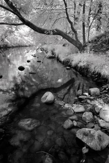 An overhanging branch with curves reflects on the water amongst the stones along a riverbank. The Little Juniata River at Bellwood, PA, in a black and white infrared picture.
