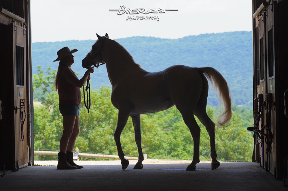 On a summer morning, a woman and her horse in a barn door silhouette.