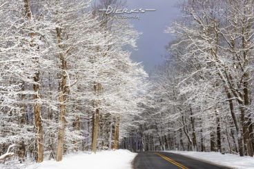 Snow covered trees branches in the woods lining a two-lane mountain road during a Pennsylvania winter.