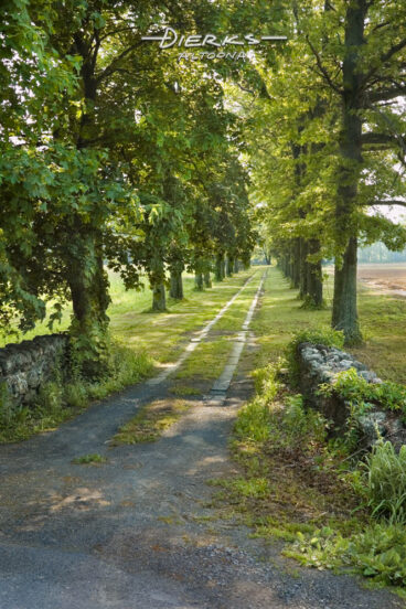 A very quiet and calming old tree-lined farm lane in summer green, leading into a far perspective.
