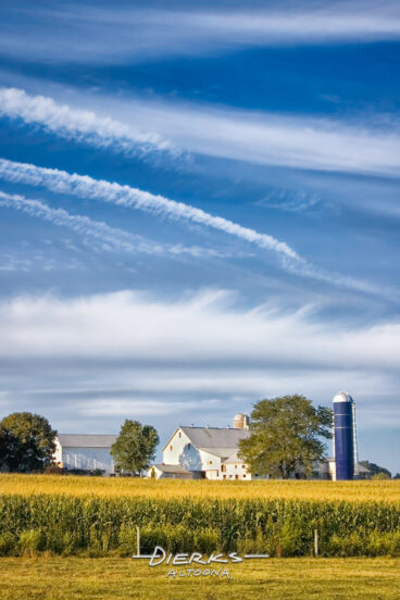 High flying mare's tail clouds above an Amish farm surrounded by a cornfield with ripening tassels.