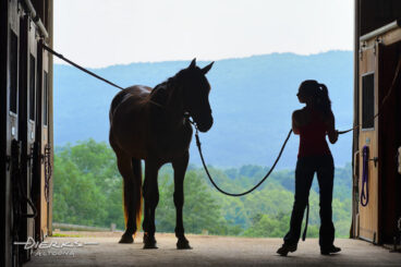 Silhouetted in the barn door on a summer day, a young girl is getting ready to saddle up and ride by first putting her horse into crossties.