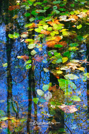 Leaves that have fallen lie slightly submerged in shallow pond water under a clear blue sky, making a colorful organic kaleidoscope.