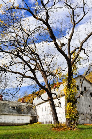 Walnut trees in front of the abandoned barn of the EshBeck Farm in the scenic fall foliage of the Delaware Water Gap.